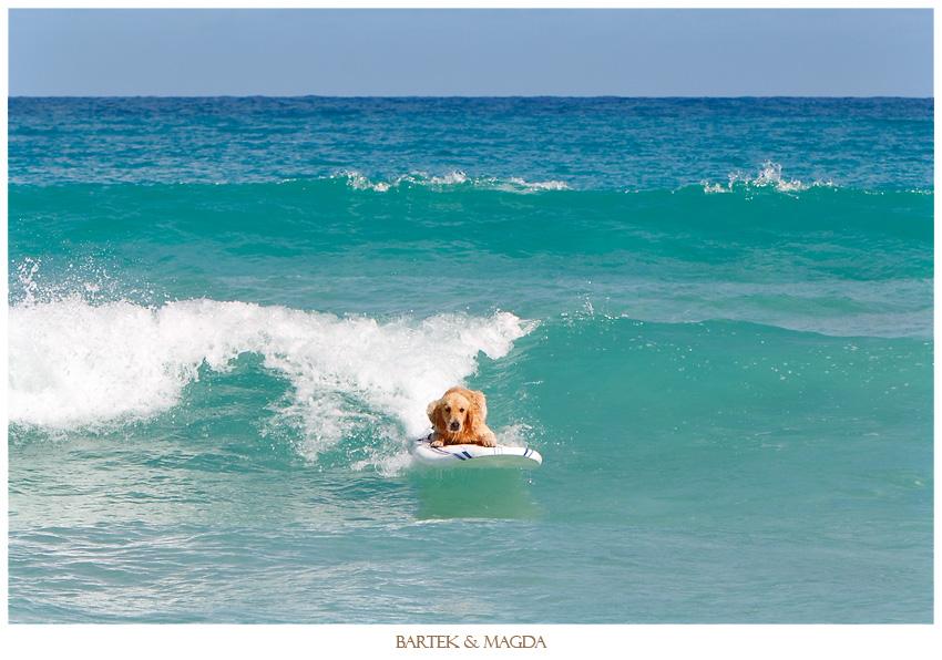 surfing wedding macao beach punta cana dominican republic
